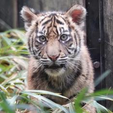 ズーラシア動物園